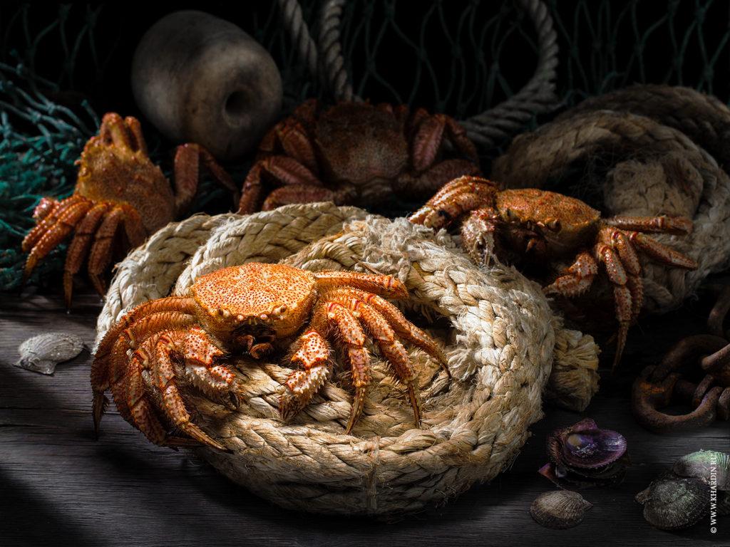 Rustic food proj. | Crab | Soviet grinder | Пятиугольный волосатый краб | Telmessus cheiragonus (Tilesius, 1812) | Фотосъемка морепродуктов и морепродукции во Владивостоке и Приморье