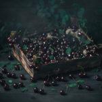 Rustic food proj. | Cherry