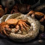 Rustic food proj. | Crab | Soviet grinder | Пятиугольный волосатый краб | Telmessus cheiragonus (Tilesius, 1812)