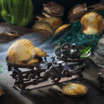 Rustic food proj. | Scallop | Гребешок Приморский Дальневосточный | Patinopecten yessoensis (Jay, 1857)